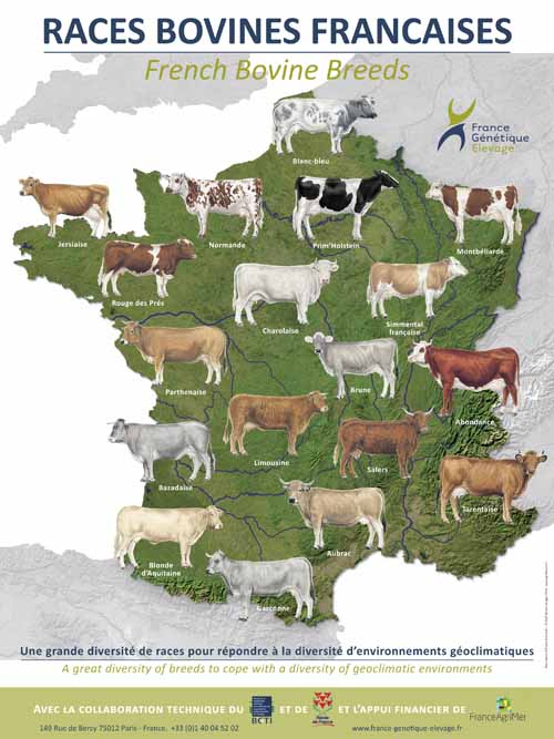 races bovines de france pdf